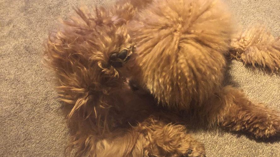 愛犬のアレルギー疑惑でセカンドオピニオンに行ってきました。