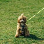 愛犬のアレルギー検査の結果と乾燥肌のスキンケア治療を開始しました。