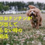 動物病院で聞いた【犬のおチンチンが出たまま戻らない時の対処法】