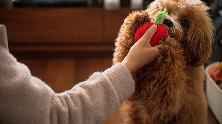 子犬の問題行動が減る!おすすめの「4つの行動」はしつけの効果がアップします。