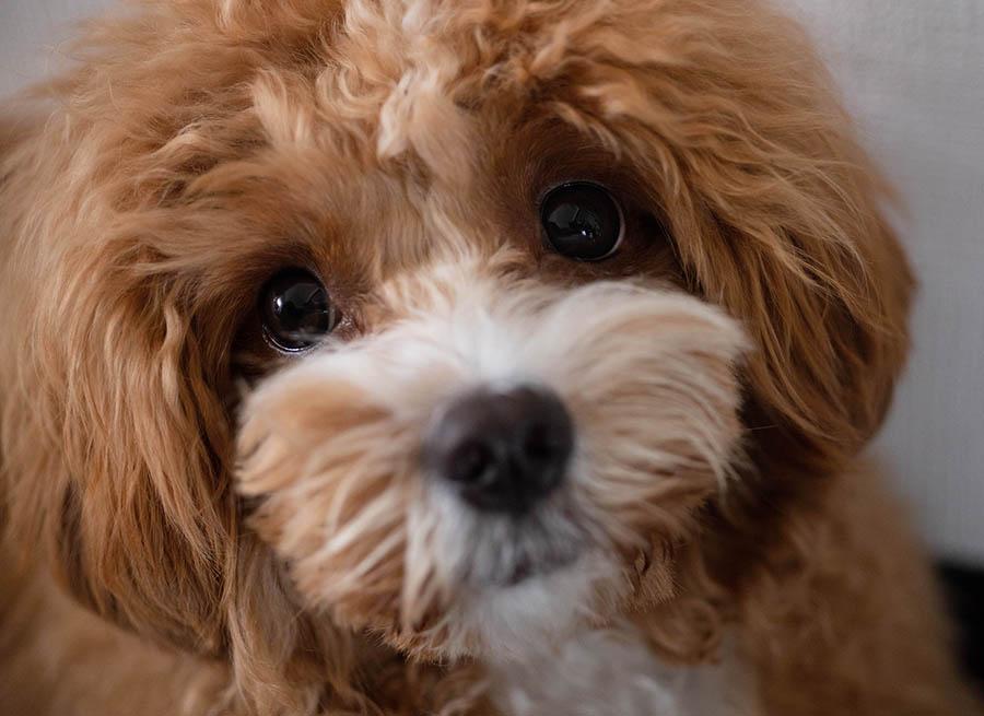 目を見れば犬の性格がわかる