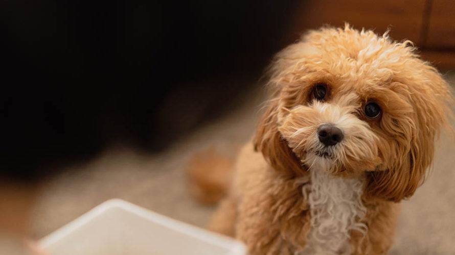 血液検査でわかった愛犬の栄養状態。キャンペーンでお得に検査を受けてみました。