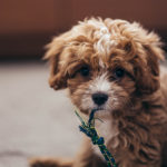 無駄吠え対策の前に知ろう。なぜ犬は吠えるのか?犬が吠える理由。