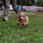 体験記❸ | しつけに悩む飼い主さんへおすすめしたい。私が育犬ノイローゼから立ち直れたブログ。