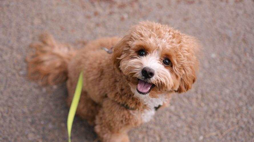 「目を見ればその犬の性格がわかる」という人に愛犬を見てもらいました。