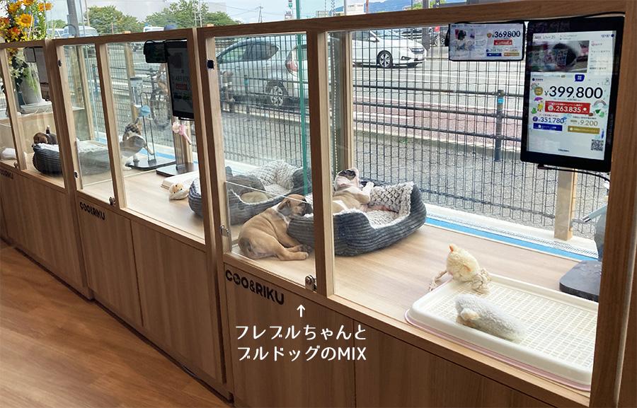 ペットショップCoo&RIKU 福岡西店店内