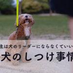 犬のしつけに主従関係は必要なし!最新版犬のしつけを試した結果