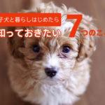 子犬との暮らしをはじめる前に知っておきたい7つのこと