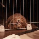 ペットのトラブルに使える個人賠償責任保険について