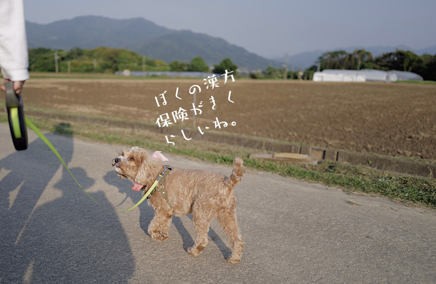 田舎道を散歩するブラン