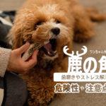『犬用鹿の角で歯が折れる』は本当!危険性や注意点と効果のまとめ