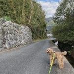 愛犬ブランと田舎暮らしを満喫中。