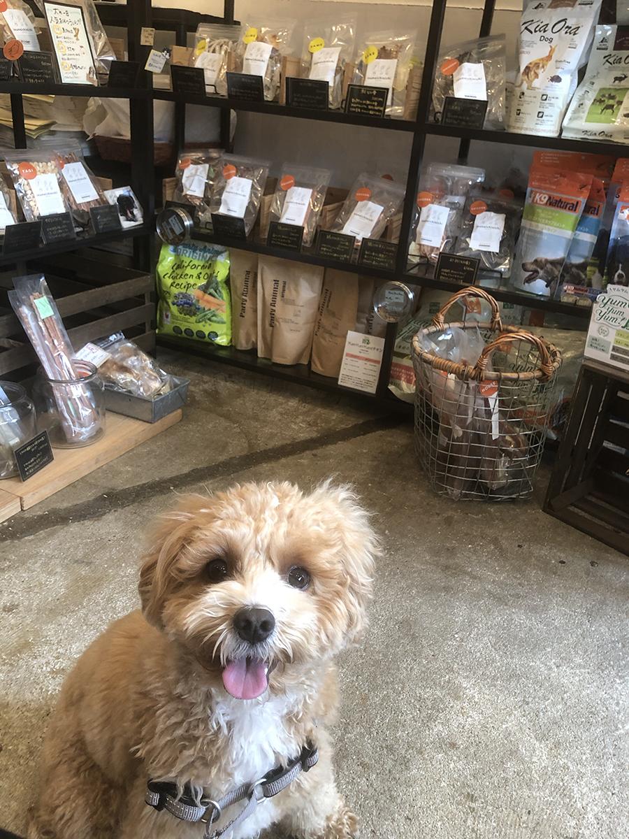 犬の一日店内の様子