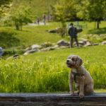 穴場の公園を発見!【福岡市西区】かなたけの里公園でのんびりお散歩。