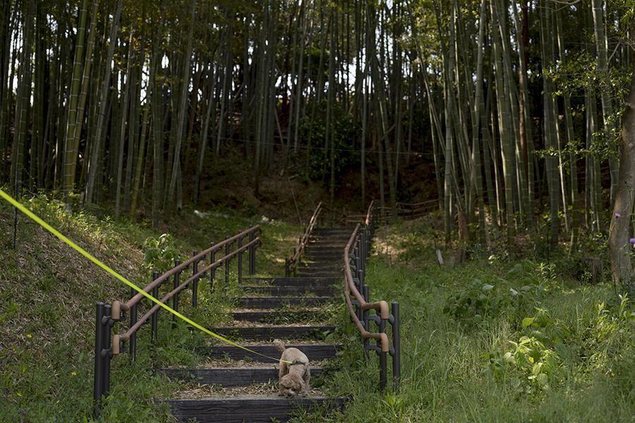 かなたけの里公園竹林