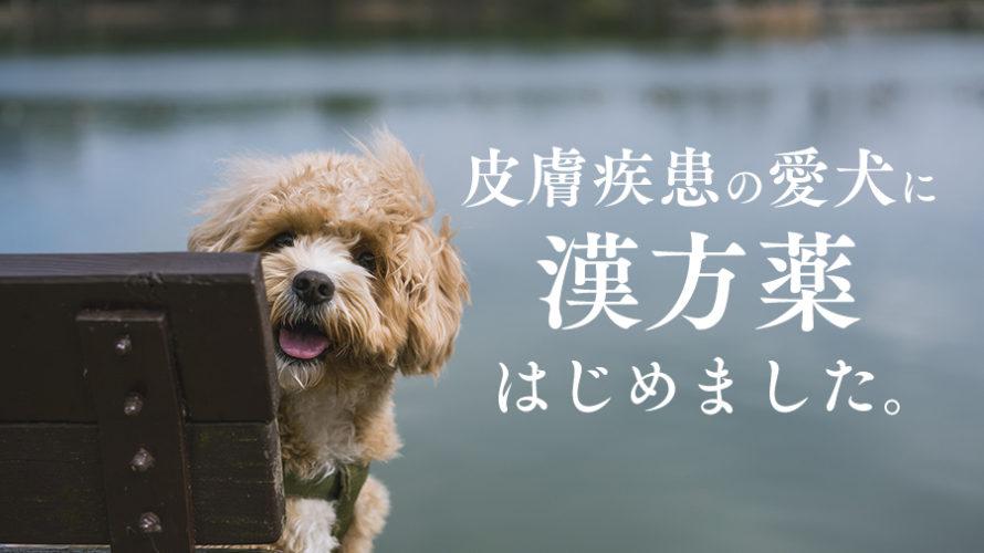 常同行動で皮膚疾患のある愛犬に漢方薬をはじめました。