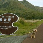愛犬とおでかけしてきました。熊本・大分編