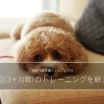 愛犬の舐め癖。常同行動改善のトレーニング(10回)を終えて