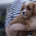 体験記❹ | 育犬ノイローゼを経験して気づいたこと。感じたこと。