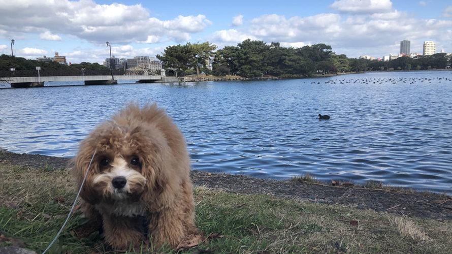 福岡市中央区 大濠公園周辺の犬と行けるお店を散策しました。
