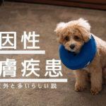 犬の心因性による皮膚病は意外と多いらしい | 愛犬ブランの場合。