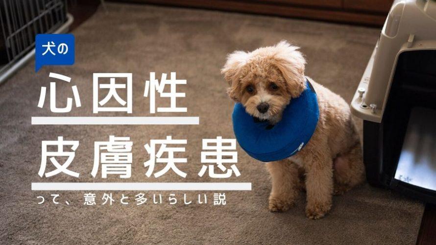 犬の心因性による皮膚病は意外と多いらしい   愛犬ブランの場合。