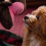 犬の甘噛み対策におすすめ!パペット人形
