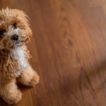 子犬がケージで静かに留守番できる方法!トレーナー直伝【我が家の成功例】