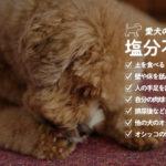 犬が「土を食べる」「手足を舐める」理由は塩分不足!?我が家は塩分摂取で改善しました。
