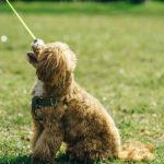 散歩の必要性について。小型犬の「散歩はしなくても大丈夫」は本当!?