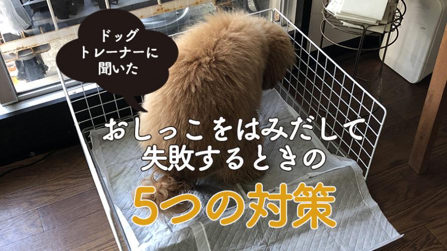 犬がトイレ端でおしっこ!はみ出して失敗する時の【成功までの5対策】