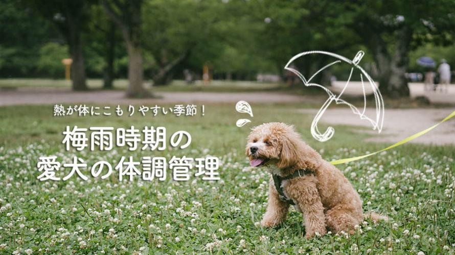 【犬にも漢方】梅雨時期の体調の変化に注意!そして、新しい漢方薬へ変更。