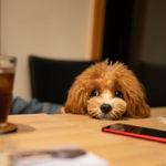 福岡 今宿 犬同伴OKのカフェV's FORT CAFE (ヴィーズフォートカフェ) の体験感想。