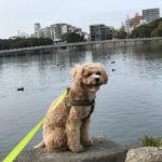 愛犬の舐め癖の頻度が増えてきたので、長めの散歩に行ってみた結果